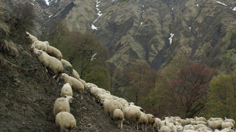 შირაქიდან თუშეთამდე  – ცხვრის გზა და ნარმოდებული ტრასები
