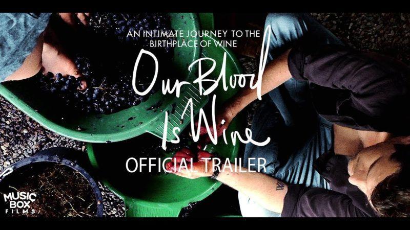 iPhone 6-ით გადაღებული ფილმი ღვინოზე, რომელიც ჩვენი სისხლია